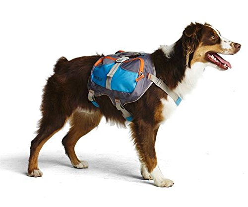 Cesar Millan Hunde-Rucksack, Größe M
