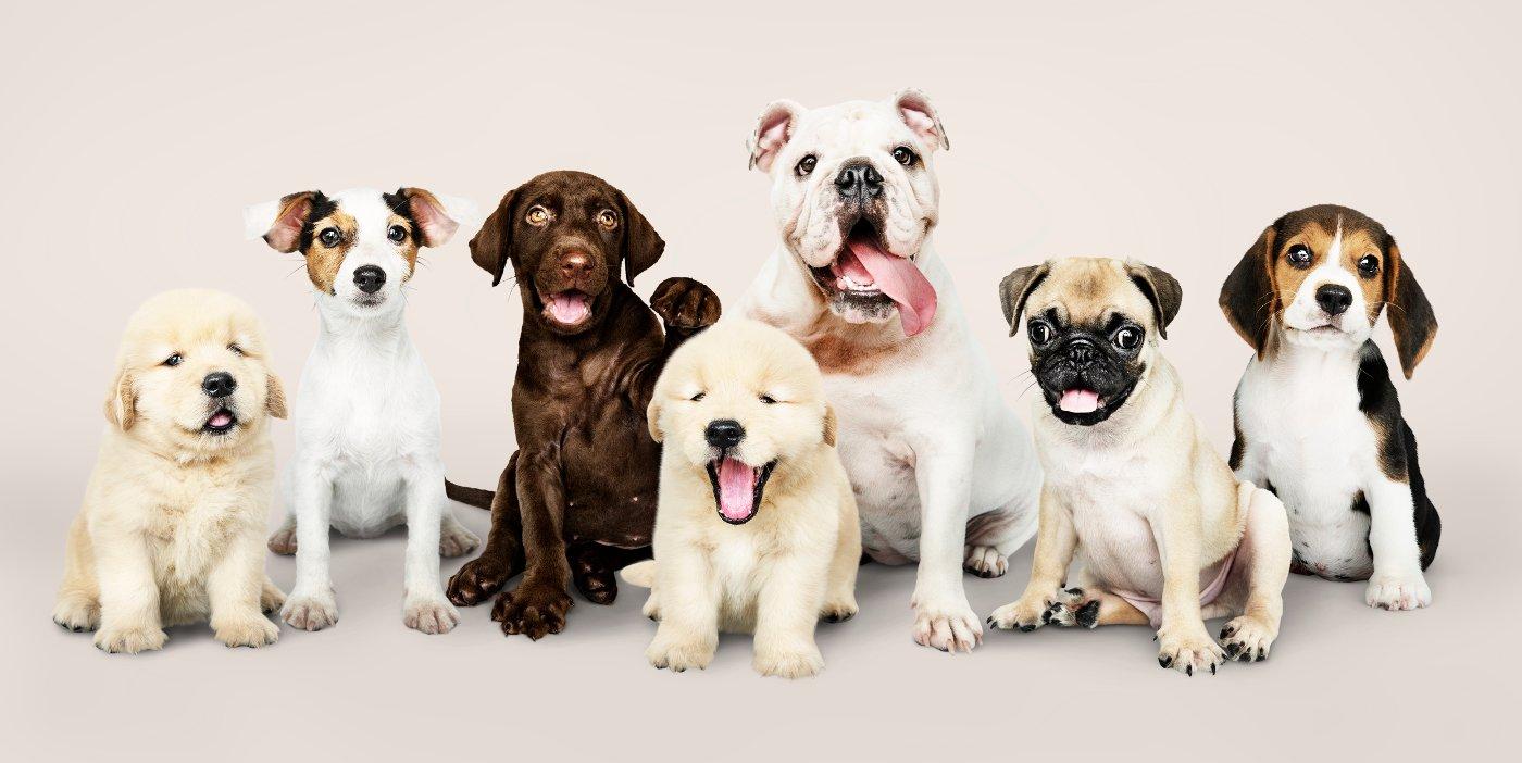 Stoppersocken Hunde   Antirutschsocken Hunde